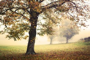 Image of foggy trees for Autumn EMLT meeting report
